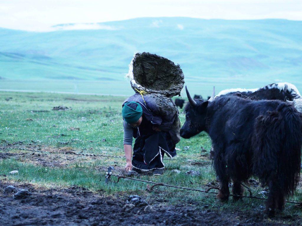 青藏高原的放牧文化