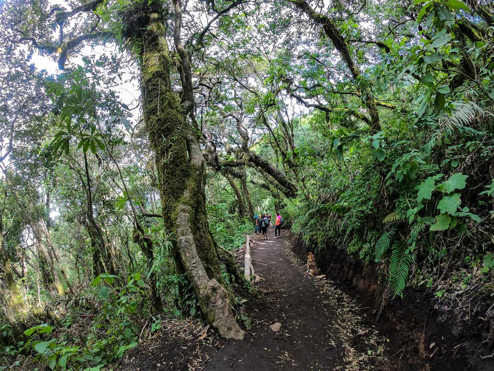 瓜地馬拉火山群中的植物群
