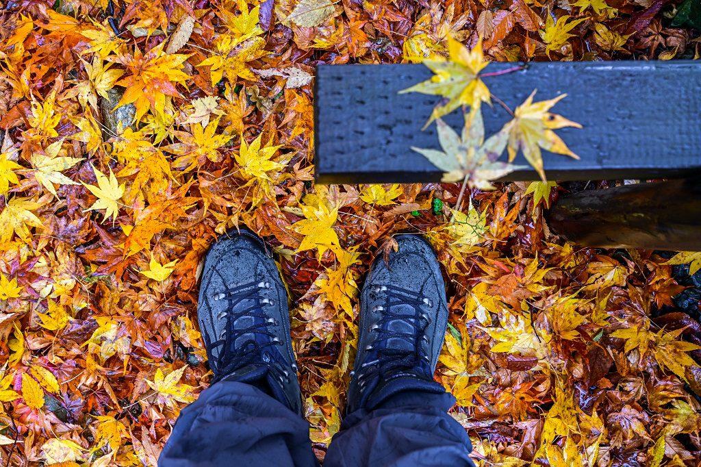 LOWA 中筒多功能健行鞋 楓葉上
