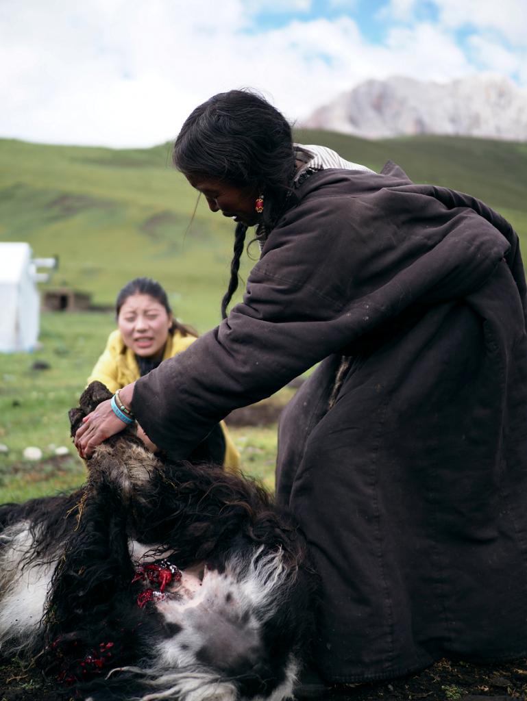 青藏高原的放牧人