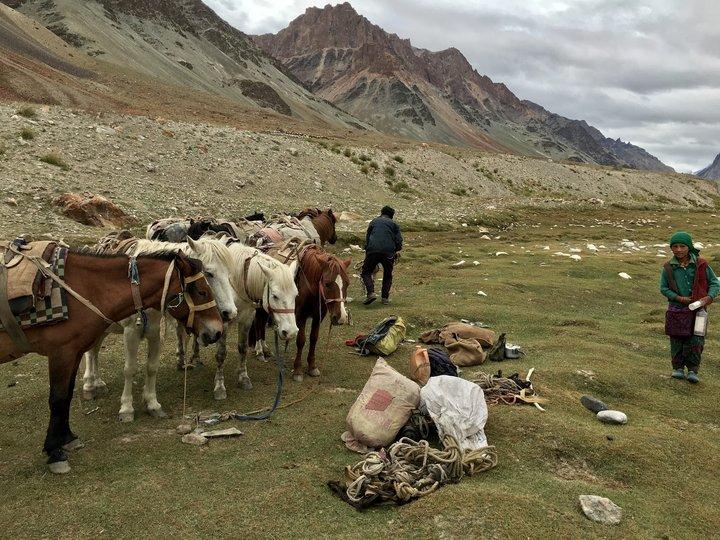 Zanskar的背工 馬
